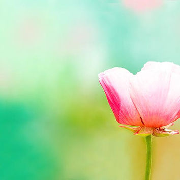 botanical photography nature poppy photography fine art 8x10 8x12 floral pink pastel flower teal art print mint yellow bedroom decor