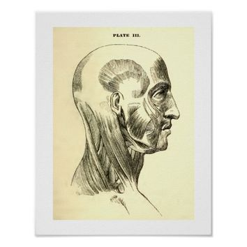 Vintage Anatomy | Muscles of the Head (circa 1852) Posters