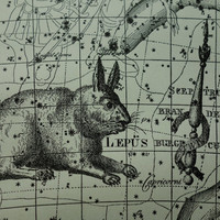 Old star chart Dutch vintage astronomy map of Unicorn Argo Rabbit Lepus Dove Bookprinter sign hemisphere constellation stars zodiac 10x15''