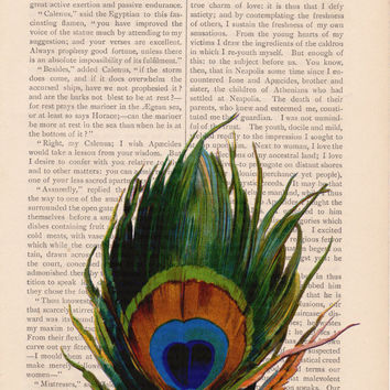 dictionary bird print art PEACOCK FEATHER print - vintage art book page print - altered art book page feather dictionary art