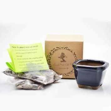 Dawn Red-Wood Bonsai Seed Kit- Gift - Complete Kit to Grow