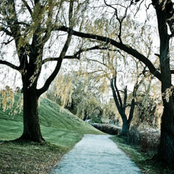 Willow Tree Path Fine Art Photography Travel Woodland Wall Art Home Decor Autumn Spring Trees 4x6