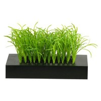 Grass in Square Black Wooden Planter