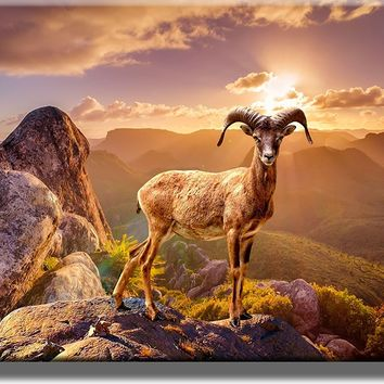 Beautiful Wildlife Picture on Acrylic , Wall Art Décor, Ready to Hang!