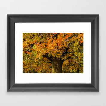 Autumn leaves Framed Art Print by Gelibolu