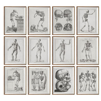 Set of 12 Prints Human Anatomy Antique, Vintage Anatomy, brown neutral, Office decor, Medical student, Dorm room, Gift Idea Picture Set *48*