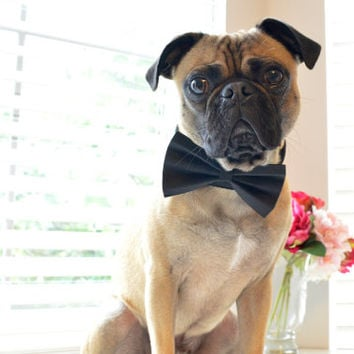 Dog Collar Bow Tie - Classic Black - Wedding Special Occasion Dog Bow