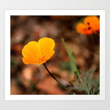 California Poppy Art Print by Henrik Lehnerer