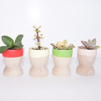 Mini Planters, Spring Fresh {Set of 4}, Mother's Day Collection