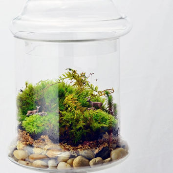 Apothecary Jar Terrarium // Moss // Deer // Home Decor // Green Gift