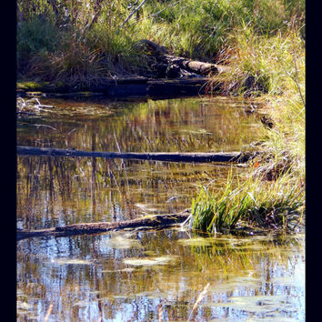 "Landscape Nature Photography, ""Water Logged"" 4x6, 5x7, 8x10, 11x14, 16x20 large print, wall art, home decor"
