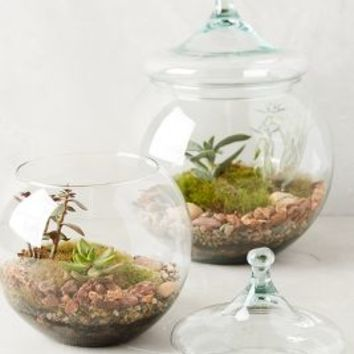 Glass Garden Terrarium by Anthropologie Multi