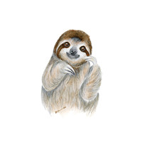 Baby Sloth Portrait