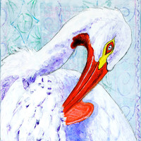 Pelican Acrylic Painting