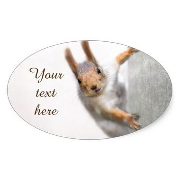 Curious squirrel oval sticker