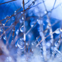 """Abstract Blue Zen Decor   """"Icy Pearls"""" Water Droplet Plant Nature Photography Print   Home Office Bedroom Bathroom Decor"""