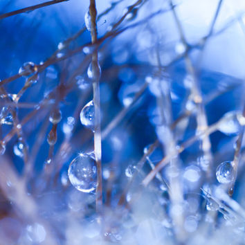 "Abstract Blue Zen Decor | ""Icy Pearls"" Water Droplet Plant Nature Photography Print 