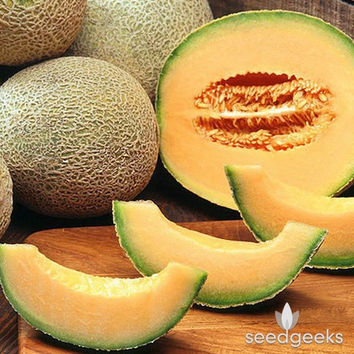 Hearts of Gold Melon Heirloom Seeds - Non-GMO, Open Pollinated, Untreated