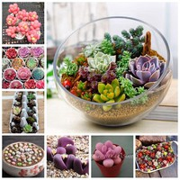 500 pcs/ bag Exotic Mini Succulent Cactus Rare Succulent Perennial Herb Plants Bonsai Pot Flower Indoor Seedfor Garden Flore Pot
