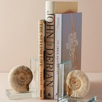 Fossil Form Bookends