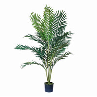 Paradise Palm Tree in Plastic Pot - 5-ft