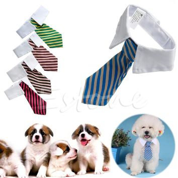 Necktie For Small Dogs