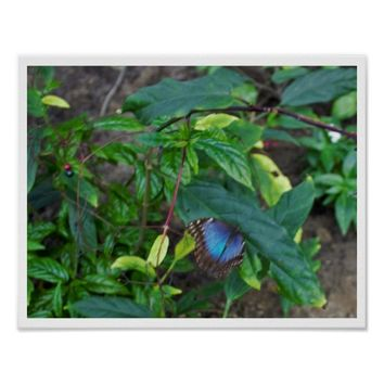 Blue Butterfly on Plant Poster