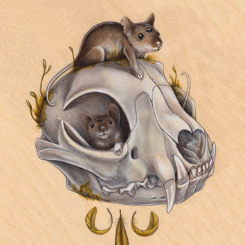 Mice with Bobcat Skull 8x10 PRINT