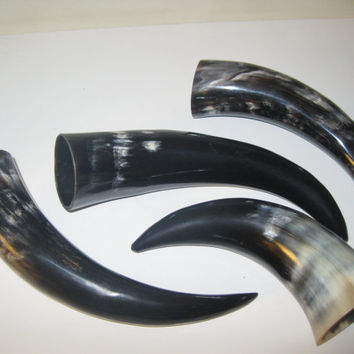 4 Polished cow drinking horns.....E4CH2...cow horn...buffalo horn....bull....steer....viking drinking horn