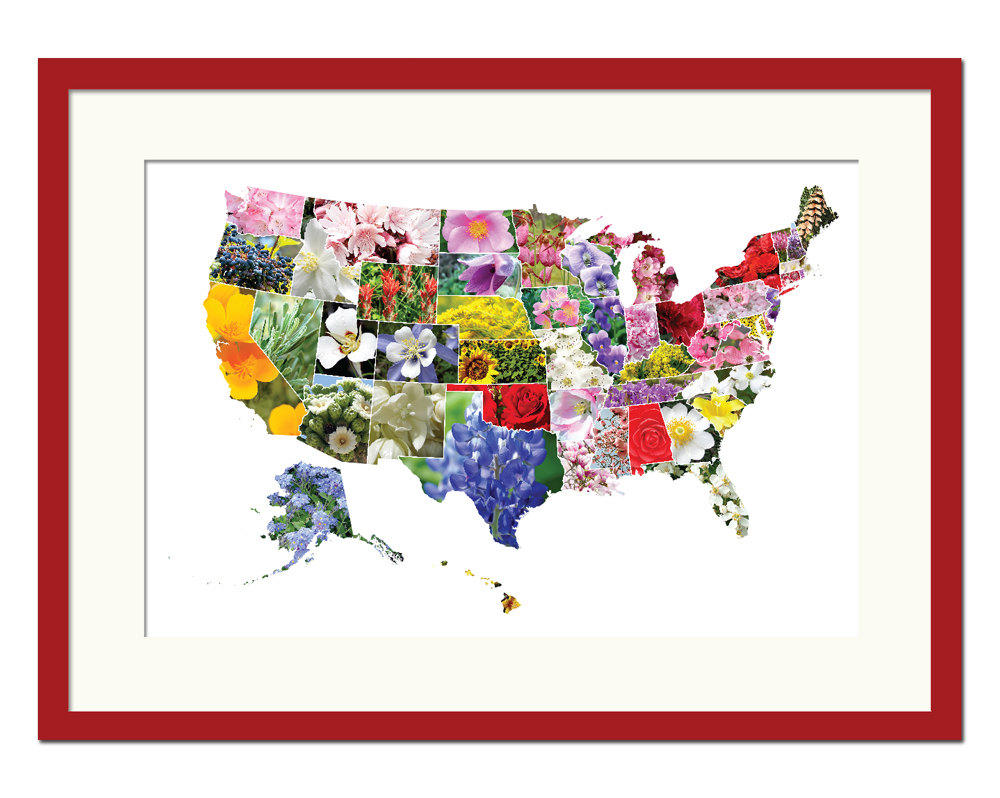 American States Flowers Map Art Print From Foliocreations On
