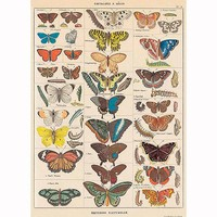 Decorative Wrap 20X28 Butterflies