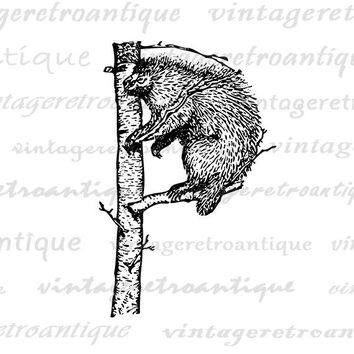 Digital Graphic Porcupine Letter P Image Letter P Printable Porcupine Download Vintage Clip Art for Transfers Printing etc HQ 300dpi No.4700