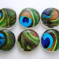 Beautiful Peacock Feather Glass Magnet Set by KREATIONSBYKRISTINE