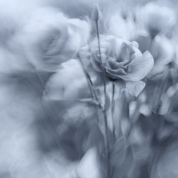 Black and white Photography Flower Photography Neutral Black and white Photo Print Eustoma Flowers Wall Art Living Room Decor