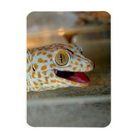 Close up portrait of Tokay gecko in TulaZoo Rectangular Photo Magnet