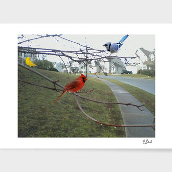 «Three Birds» Art Print by Casey Bell - Exclusive Edition from $24.9 | Curioos