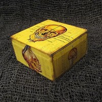 Skull Anatomy Keepsake Box