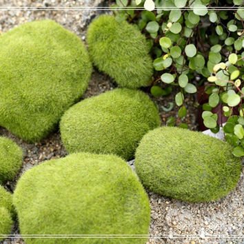 Mini Moss Stone Fairy Garden Accessories, Miniature Plants, Mini Planter Decor, Terrarium Accessories,Micro Landscape ornaments