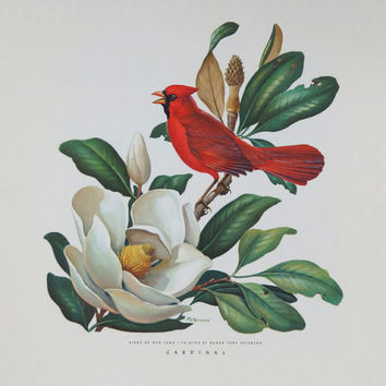 1954 Cardinal Lithograph * Roger Tory Peterson * Birds Of Our Land * John Morrell Co * Red Bird White Magnolia Blossom * Vintage Bird Print