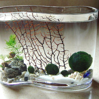 Zen Big Wave Marimo Ball Unique Mini Aquarium/Terrarium
