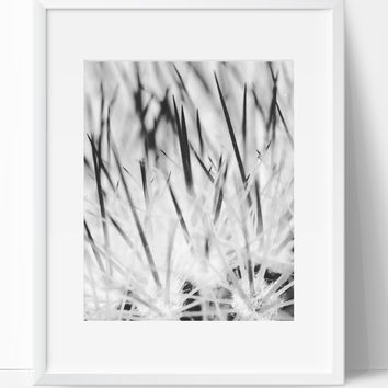 Inner Cactus Art Photography, Black and White Modern Art, Prints