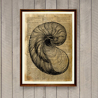 Seashell print  Nautical wall decor Dictionary page Sea life poster WA847