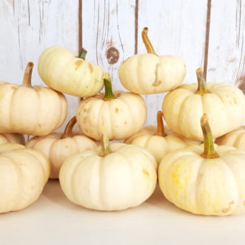 12 Mini Off White Pumpkins, Fall Wedding Center Pieces, Fall Country Wedding Table Decor