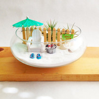 Miniature Beach Garden Terrarium with Air Plants