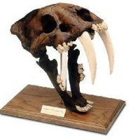 Replica Saber Tooth Cat with stand, Tarpit Finish-- Page Museum La Brea Tar Pits