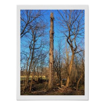 Trees in Tyler Park Poster