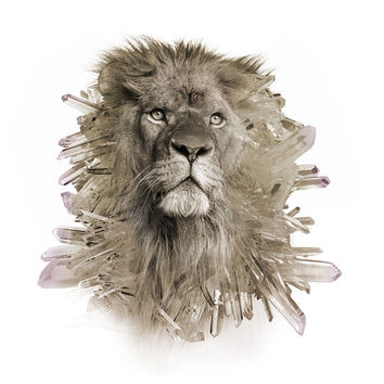 Quartz Crystal Lion Signed Color Print | Art | Photograph | Design