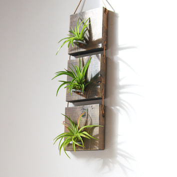 Best air plant wall products on wanelo for Air plant wall art