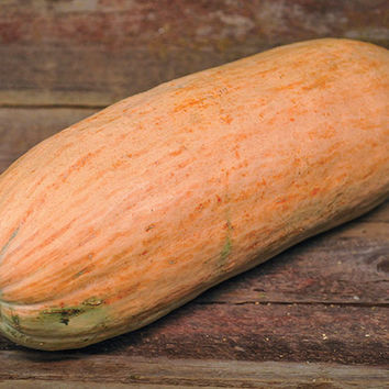 Pastila Shampan-Winter Squash | Baker Creek Heirloom Seed Co