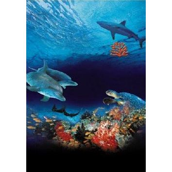 "Ocean Wonderland Poster Whales Dolphins 16""x24"""